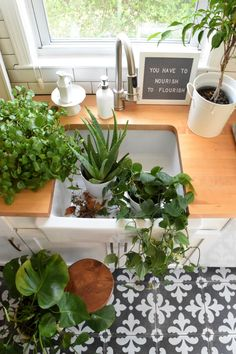 House Plants- My Top House Plants That Can Be Left Alone #urbanjunglebloggers