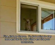 Good Morning Funny Pictures Humor Dump A Day 43 Ideas Joke Of The Day, Memes Of The Day, You Funny, Funny Cute, Funny Stuff, Dog Stuff, Funny Animal Pictures, Funny Animals, Dogs