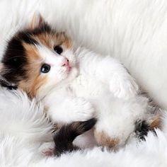 Kitten cuddles🐱🐱🐱 #cat #instafollow #tagsforlikes #pets #animals