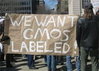 The California Secretary of State's office announced that the Right to Know initiative to label genetically engineered foods will be on the state's November ballot. The historic initiative would be the first law in the United States requiring labeling of a wide range of genetically engineered foods.