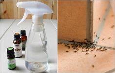 Need to get rid of ants from your home or just trying to keep them out? Then this powerful, but easy to make, essential oil spray is perfect for you.