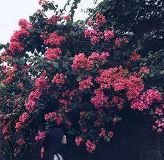 •bloom•  #aesthetic  #gloomy