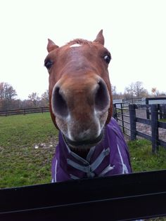 """Love horses - """"Hi, Dad! Types Of Animals, Cute Animals, Purple Love, Ponies, Scarfs, Make Me Smile, Dads, Humor, Group"""
