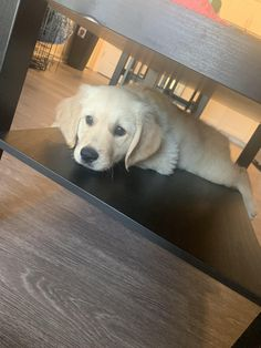 We couldn't understand why he kept knocking our remotes off the coffee table shelf. Golden Retriever Mix, Golden Retrievers, Doggies, Dogs And Puppies, Dog Training Videos, Cutest Dogs, Medium Sized Dogs, Lucca, Dog Stuff