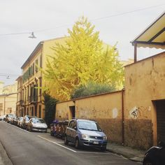 Colori d'autunno - Autumn's Colors #natura #city #autunno2015 #autumn #igerpisa #igersitalia @italian_places #picoftheday #colors #place #igersoftheday