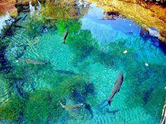 clear water spring  Oshino-hakkai Japan