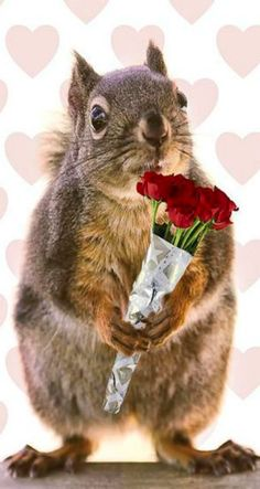 "Happy Valentines Day to all ""Feelin' Squirrely"" followers and friends. We squirrels love you...(and Sue does too!!!)"