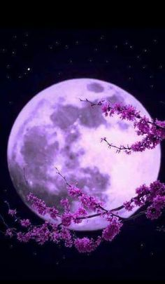 Best collection of most beautiful Moon pictures amazing photographs. These stunning moon photos are best to use as wallpapers or your cover photos. Purple Love, All Things Purple, Purple Rain, Purple Stuff, Beautiful Moon, Beautiful World, Shoot The Moon, Moon Art, Moon Moon