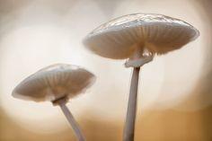 two of those beautiful porcelain fungus.