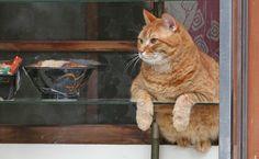 店の休憩時間にショーケースの中から「人間観察」を楽しむ?看板猫のピンク=荒川区町屋(尾崎修二撮影)