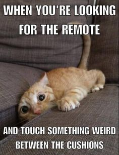 Looking for the remote.