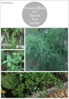 New Nostalgia: Growing #Herbs In A Square Foot Garden #garden