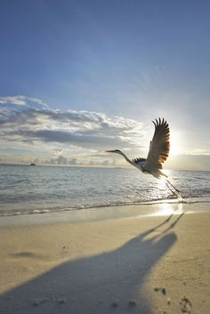 Morning Beach Run | La Beℓℓe ℳystère