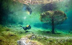 Aujourd'hui L'extrême en vidéo plonge dans le monde enchanté du lac vert autrichien qui n'existe que quelques semaines dans l'année. Au printemps, une prairie, parsemée d'arbres, est envahie par...
