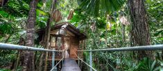 Cabin Accommodation | Daintree Accommodation - Daintree Wilderness Lodge