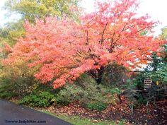 Exbury Gardens, Hampshire, UK http://ladyhiker.com/