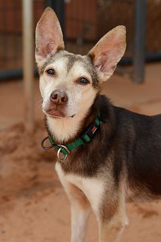 Terrier named Ricki is available for adoption at Best Friends Sanctuary in Kanab, Utah | Best Friends Animal Society