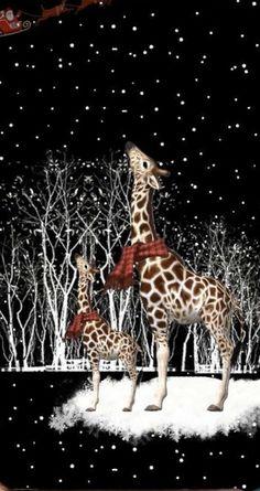 Santa and giraffe Giraffe Art, Cute Giraffe, Giraffe Pictures, Cute Animal Pictures, Animals And Pets, Baby Animals, Cute Animals, Christmas Animals, Christmas Art