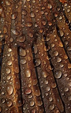 : hydrophobic wings of a black bird Mabon, Rain Drops, Dew Drops, Water Drops, Patterns In Nature, Textures Patterns, Pattern Texture, Fotografia Macro, Brown Aesthetic