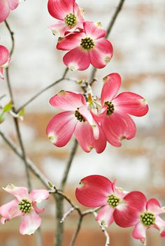 Dogwood and pink. It's our state flower and I like that.
