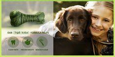 FACEBOOK FREEBIE $$ FREE Sample of Minties Dog Treats!