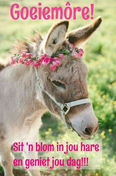 To know more about Animals Flower & Donkey, visit Sumally, a social network that gathers together all the wanted things in the world! Featuring over 549 other Animals items too! Farm Animals, Animals And Pets, Cute Animals, Beautiful Horses, Animals Beautiful, Beautiful Things, Cute Donkey, Goeie More, Dog Wedding