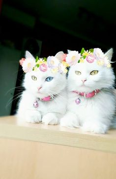 Kitties wearing flowers