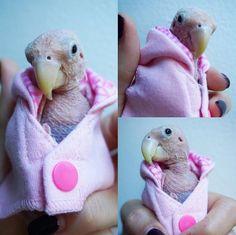 Foto: Reprodução/Instagram(rhea_thenakedbirdie)  Batizado com o nome de Rhea, o pássaro de 2 anos sofre de uma doença que impede que ele de...