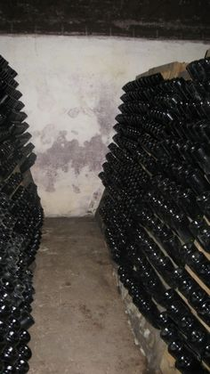 Cramele Rhein de la Azuga. Asa sta vinul spumant, noua luni de zile.