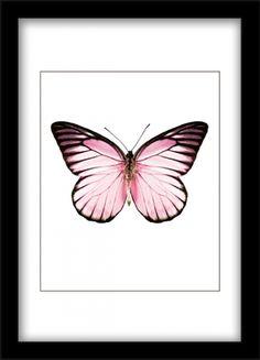 Juliste jossa vaaleanpunainen perhonen