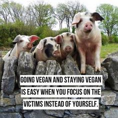 going #vegan and staying vegan is easy when you focus on the victims instead of yourself