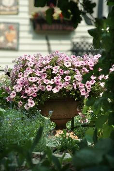 Shock Wave Pink Vein is always a great choice for a container! The princess vibes we get from this flower are strong. That soft pink can make everyone feel like a queen in their garden. Flower Containers, Shock Wave, Queen, Hanging Baskets, Petunias, Container Gardening, Rave, Garden Ideas, Floral Wreath