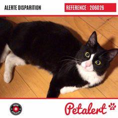 Cette Alerte (206026) est désormais close : elle n'est donc plus visible sur la plate-forme Petalert Suisse. Nous avons retrouvé notre animal Merci pour votre aide. Visible, Aide, Cats, Switzerland, Thanks, Shape, Animaux, Gatos, Cat