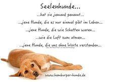 that's how you were - Hunde All Dogs, I Love Dogs, Cute Dogs, Animals And Pets, Cute Animals, Irish Terrier, Pet Life, Dog Quotes, True Friends