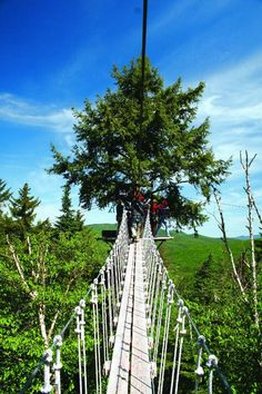 The Bretton Woods Canopy walk takes you above the trees on one of the tallest mountains in New Hampshire, giving you an experience that will stick with you forever.
