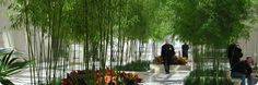 Image result for bamboo interior