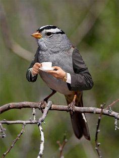 coffee time surrealism bird man