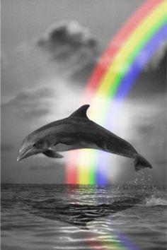 Dolphin Art - dolphins Fan Art