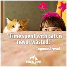 Too cute! #awwww #catlovers #kitties