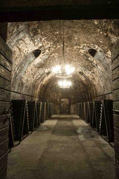 Glass Of Champagne, Italian Wine, Wine Racks, Beautiful Person, Wine Bottles, Tour Guide, Vineyard, Pottery, Tours