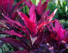 Get advice for enjoying a beautiful Florida Gardening, surroundings, or yard. Our gurus show you everything necessary to effectively florida gardening landscaping Florida Landscaping, Florida Gardening, Tropical Landscaping, Backyard Landscaping, Landscaping Ideas, Bali Garden, Balinese Garden, Garden Plants, Pool Plants