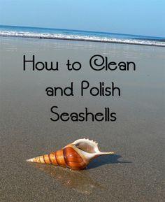 Como limpiar y aclarar conchas de mar.
