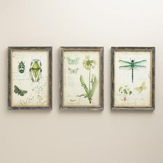 Inspire curiosity with when you display our Curiosities Wall Art, featuring a dragonfly, beetle and floral print, each surrounded by a distressed gray frame. Reminiscent of antique scientific artwork, this trio of prints brings a vintage note to your wall décor.