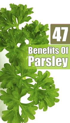 47 Amazing Benefits and Uses Of Parsley For Skin, Hair And Health