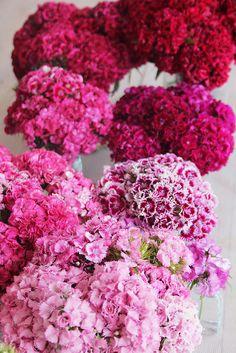 ©La mariee aux pieds nus - Oeillets des poetes en camaieu / Utiiliser une seule sorte de fleur placée par couleur par vase pour un effet dégradé sur les tables