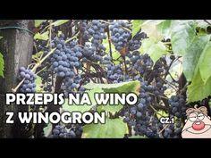 Wino Winogronowe (GRONOWE) cz.1 - prosty przepis na domowe wino z winogron :) - YouTube Ale, The Creator, Narnia, Fruit, Youtube, Alcohol, Ale Beer, Youtubers, Youtube Movies