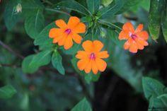 Orange Flowers by Highway