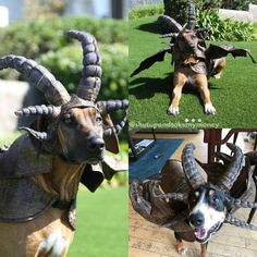 Dragon Dog Costume - Barks in fireballs. Zero fluffs given! Funny Greetings, Funny Greeting Cards, Black Plague Doctor Mask, Giant Water Slide, Fire Breathing Dragon, Dog Ramp, Dragon Costume, The Big Lebowski, Take My Money
