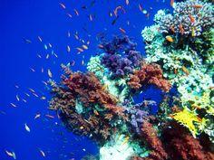 Korallenlandschaft im Nauru Reiseführer http://www.abenteurer.net/3852-nauru-reisefuehrer/