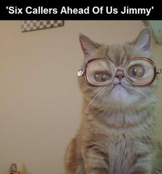 "CAT FASHION | ""Six Callers Ahead of Us, Jimmy!"" - Omg, doesn't this cat look just like the lady on that commercial?!?!!  LOL!!"